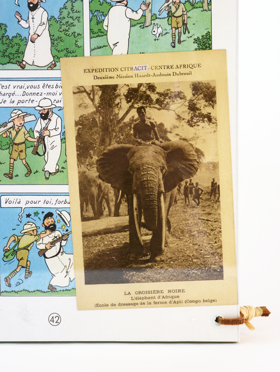 Bula-Matari (L'éléphant d'Afrique) 2/9